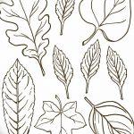 Фото эскиз тату лист дуба от 11.09.2018 №003 - sketch of tattoo oak leaf - tatufoto.com