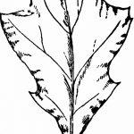 Фото эскиз тату лист дуба от 11.09.2018 №004 - sketch of tattoo oak leaf - tatufoto.com