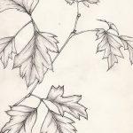 Фото эскиз тату лист дуба от 11.09.2018 №007 - sketch of tattoo oak leaf - tatufoto.com
