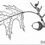 Фото эскиз тату лист дуба от 11.09.2018 №008 - sketch of tattoo oak leaf - tatufoto.com