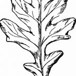 Фото эскиз тату лист дуба от 11.09.2018 №012 - sketch of tattoo oak leaf - tatufoto.com