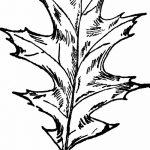 Фото эскиз тату лист дуба от 11.09.2018 №048 - sketch of tattoo oak leaf - tatufoto.com