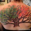 Фото рисунка тату дерево дуб 20.10.2018 №066 - tattoo tree oak drawing - tatufoto.com
