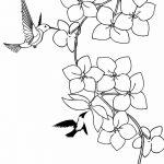 Фото эскиз тату колибри 15.10.2018 №006 - sketch of hummingbird tattoo - tatufoto.com