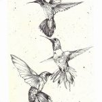 Фото эскиз тату колибри 15.10.2018 №016 - sketch of hummingbird tattoo - tatufoto.com
