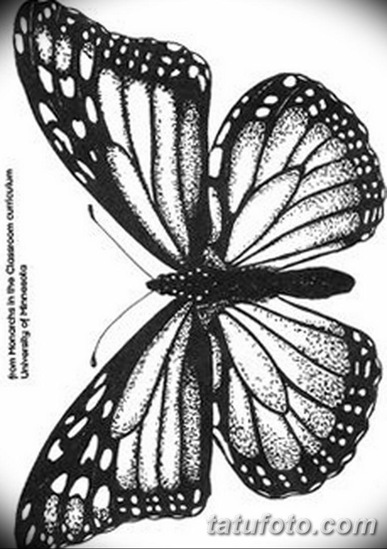 черно белый эскиз тату рисункок бабочка 11.03.2019 №009 - tattoo sketch - tatufoto.com