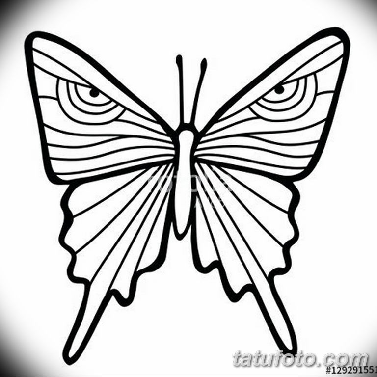 черно белый эскиз тату рисункок бабочка 11.03.2019 №058 - tattoo sketch - tatufoto.com