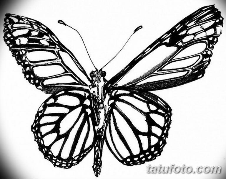 черно белый эскиз тату рисункок бабочка 11.03.2019 №063 - tattoo sketch - tatufoto.com