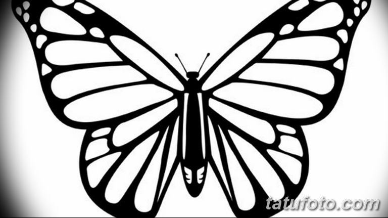 черно белый эскиз тату рисункок бабочка 11.03.2019 №066 - tattoo sketch - tatufoto.com