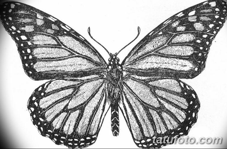 черно белый эскиз тату рисункок бабочка 11.03.2019 №070 - tattoo sketch - tatufoto.com