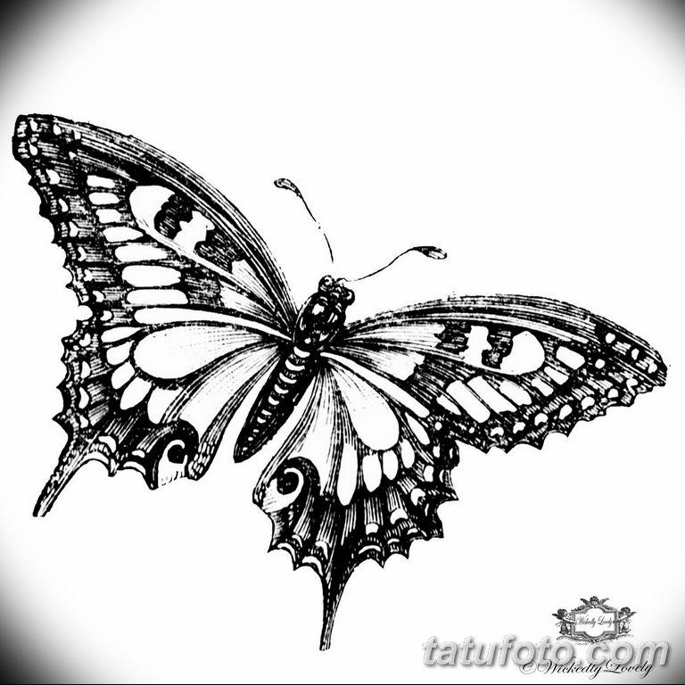 черно белый эскиз тату рисункок бабочка 11.03.2019 №077 - tattoo sketch - tatufoto.com