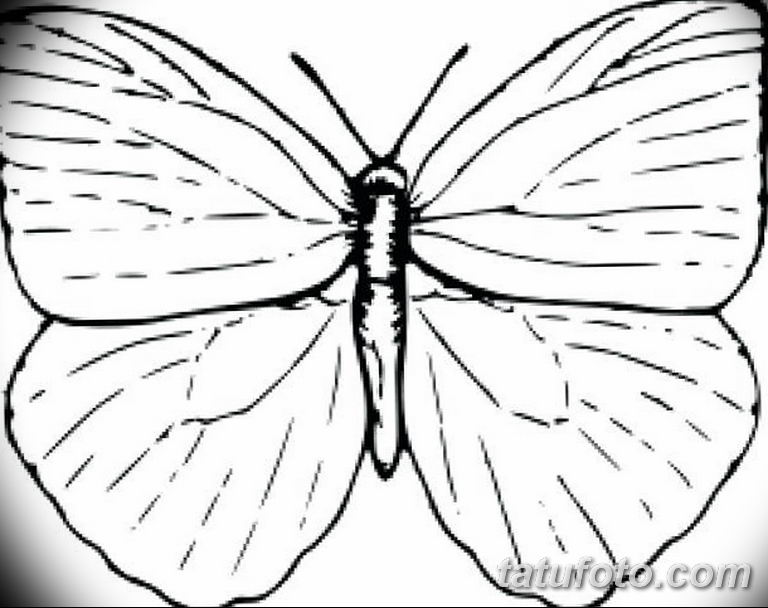 черно белый эскиз тату рисункок бабочка 11.03.2019 №098 - tattoo sketch - tatufoto.com