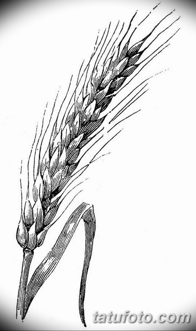 черно белый эскиз тату рисункок веточки 11.03.2019 №006 - tattoo sketch - tatufoto.com