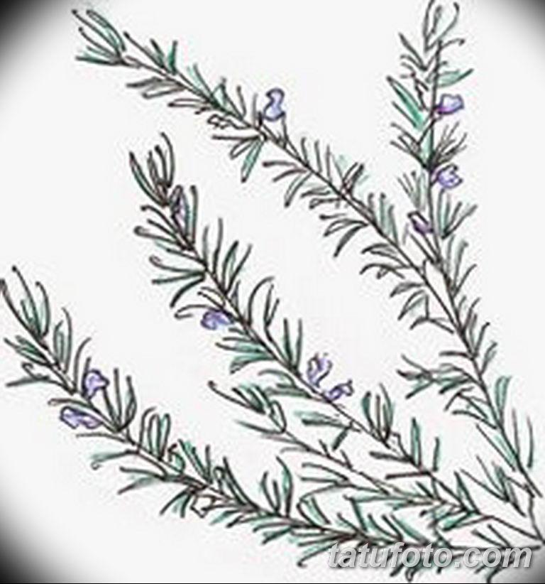 черно белый эскиз тату рисункок веточки 11.03.2019 №007 - tattoo sketch - tatufoto.com
