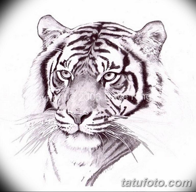 эскизы тату тигр для девушки 08.03.2019 №029 - tattoo sketches - tatufoto.com