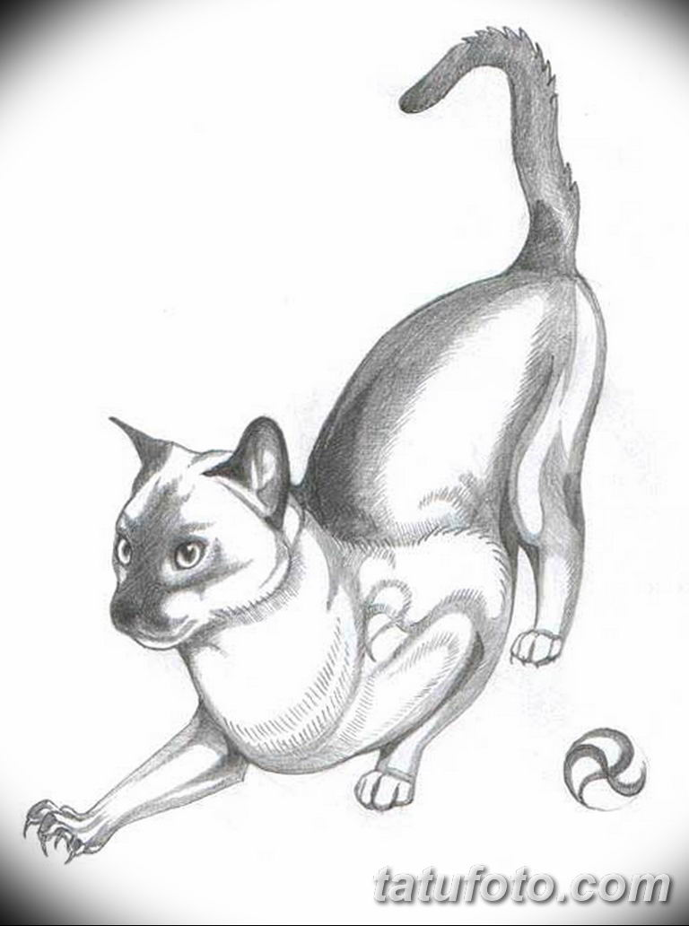 эскиз тату кошка для девушек 08.03.2019 №022 - tattoo sketches - tatufoto.com