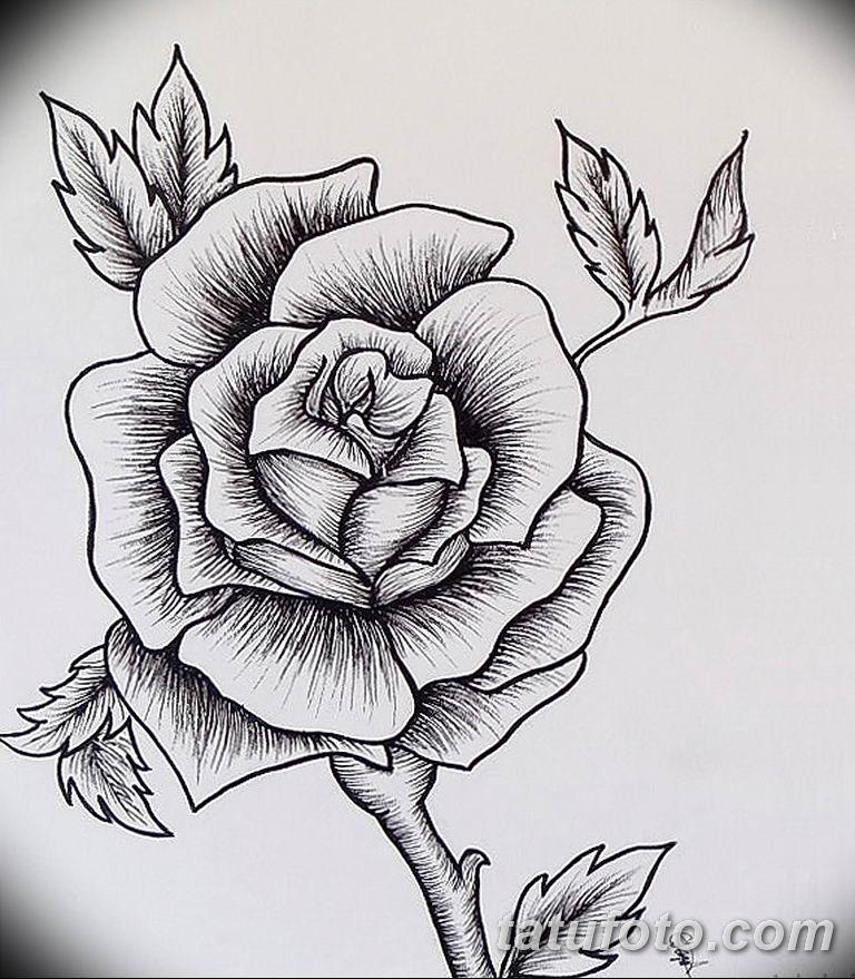 drawings of roses - 600×700