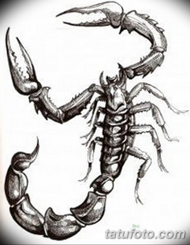 эскиз тату скорпиона для девушек 08.03.2019 №006 - tattoo sketches - tatufoto.com