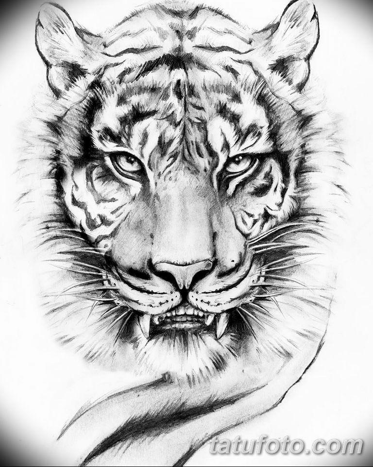 знаю тигр тату эскиз картинки почему