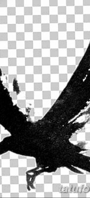 Фото тату черный ворон 15.04.2019 №081 – ideas black raven tattoo – tatufoto.com