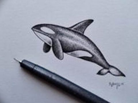 Эскиз для тату касатка 31.05.2019 №031 - sketch tattoo killer whale - tatufoto.com