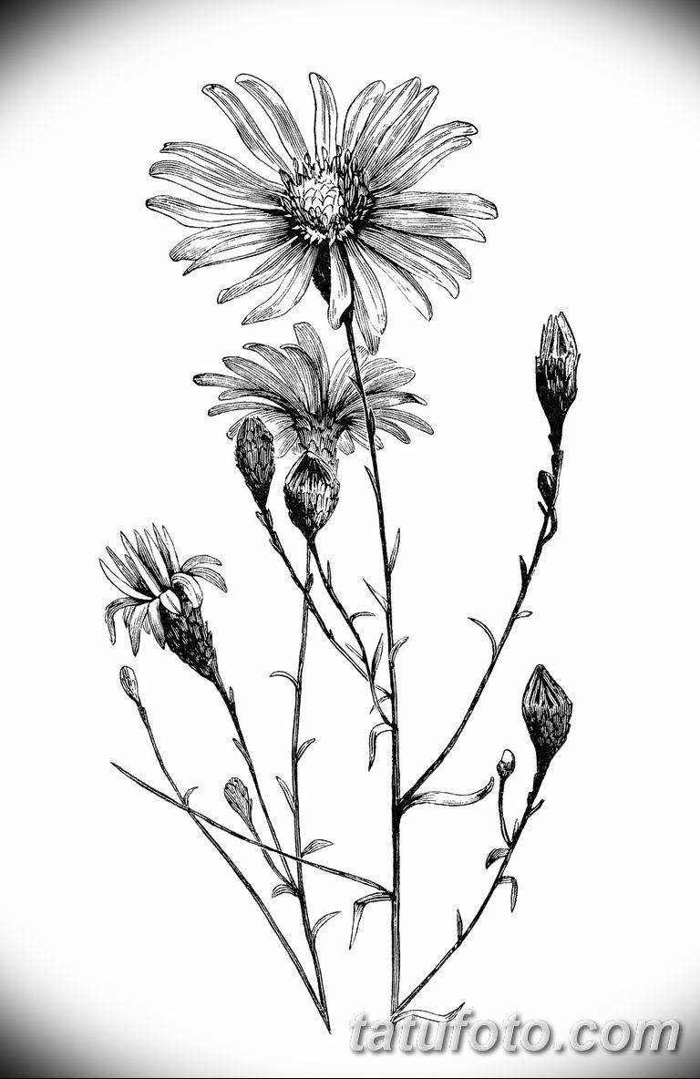 Фото тату белые цветы18.06.2019 №236 - tattoo white flowers - tatufoto.com