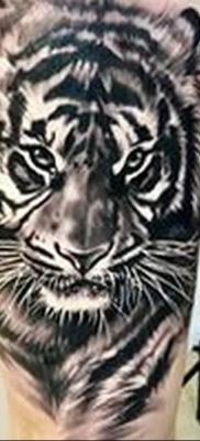 Фото тату белый тигр 28.07.2019 №006 – white tiger tattoo – tatufoto.com