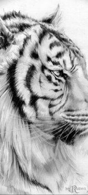 Фото тату белый тигр 28.07.2019 №041 – white tiger tattoo – tatufoto.com