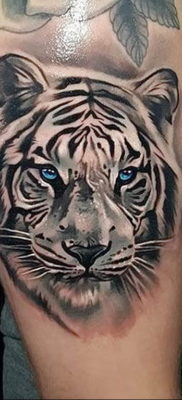 Фото тату белый тигр 28.07.2019 №058 – white tiger tattoo – tatufoto.com