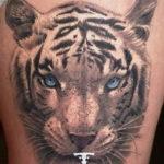 Фото тату белый тигр 28.07.2019 №062 - white tiger tattoo - tatufoto.com