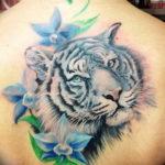 Фото тату белый тигр 28.07.2019 №066 - white tiger tattoo - tatufoto.com