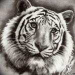 Фото тату белый тигр 28.07.2019 №085 - white tiger tattoo - tatufoto.com