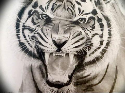Фото тату белый тигр 28.07.2019 №095 - white tiger tattoo - tatufoto.com