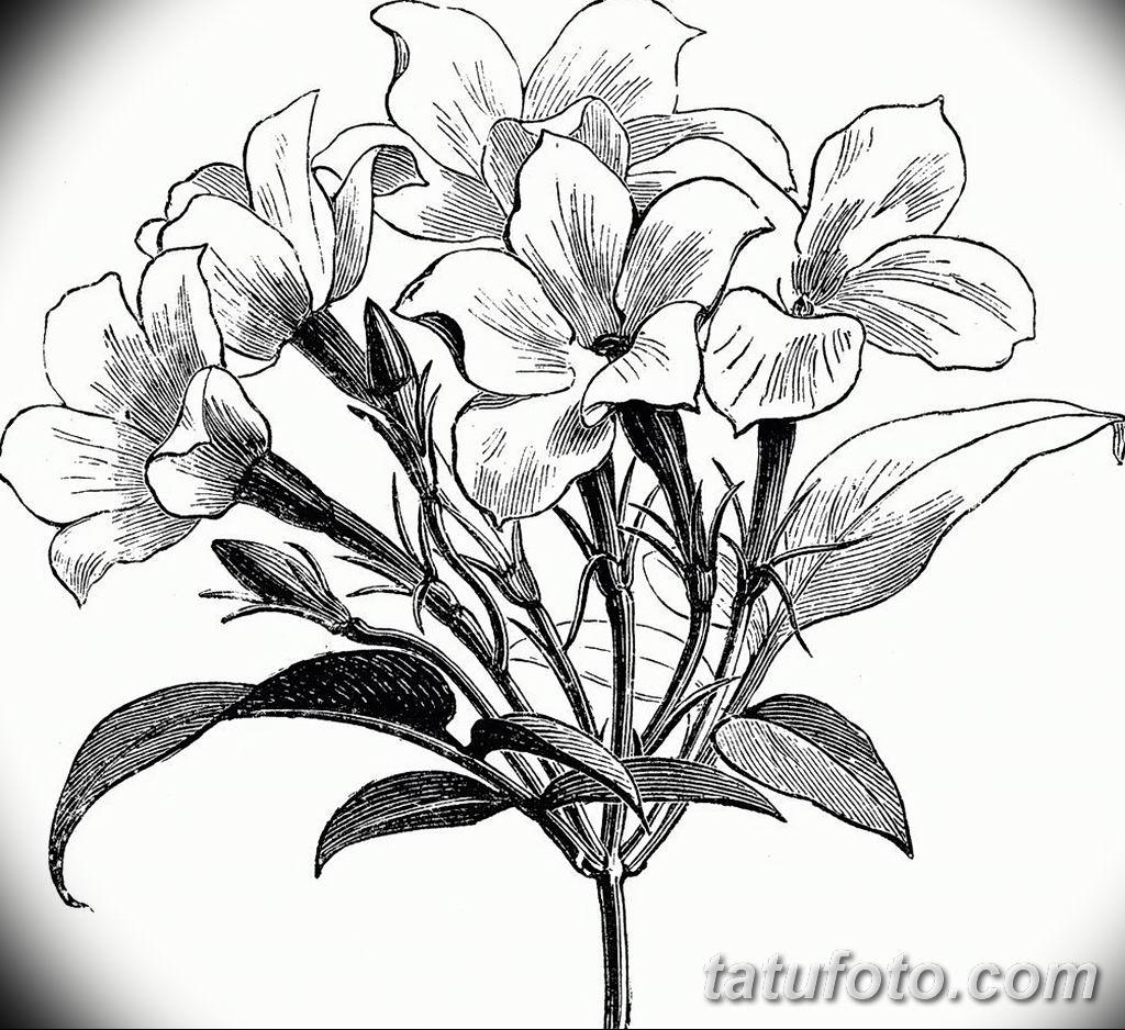 Фото эскиза тату жасмин 22.08.2019 №022 - jasmine tattoo sketch - tatufoto.com