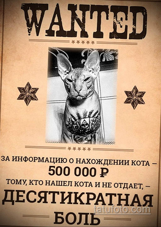 Побег татуированного кота - весь Екатеринбург ищет кошку с тюремными татуировками - фото 8