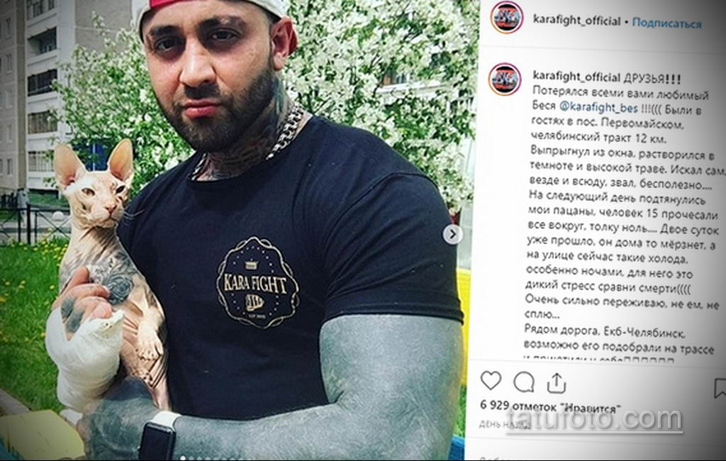 Побег татуированного кота - весь Екатеринбург ищет кошку с тюремными татуировками - фото 9