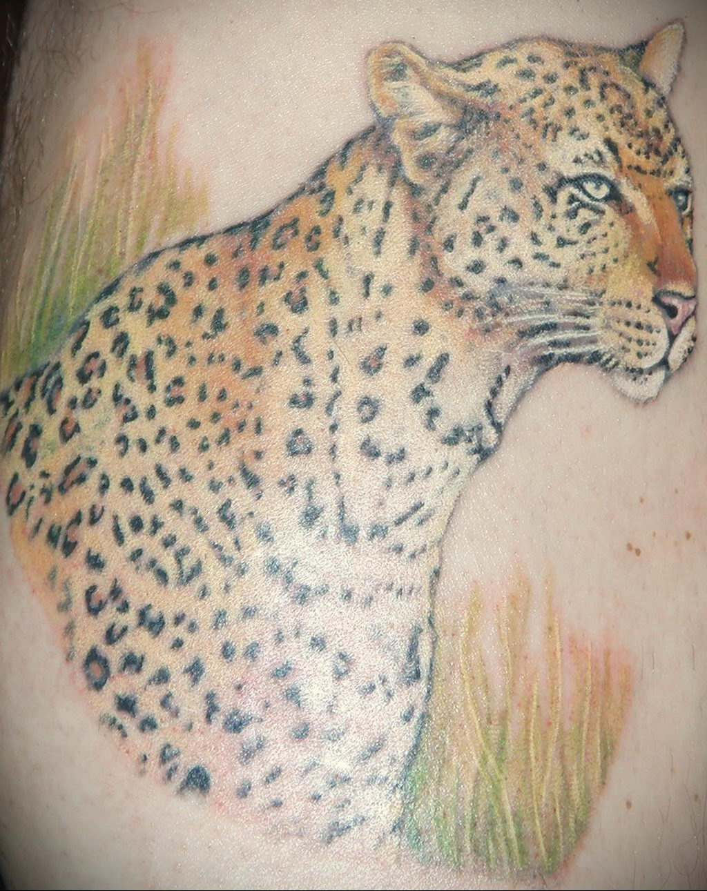 Фото тату Гепард 12.01.2020 №074 -cheetah tattoo- tatufoto.com