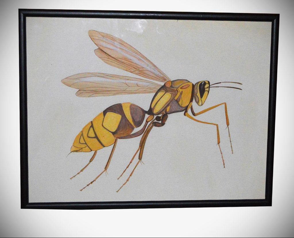 drawing wasp 07.01.2020 №1010 -wasp tattoo sketch- tatufoto.com