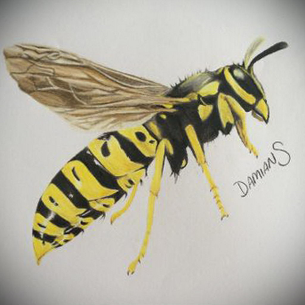 drawing wasp 07.01.2020 №1043 -wasp tattoo sketch- tatufoto.com