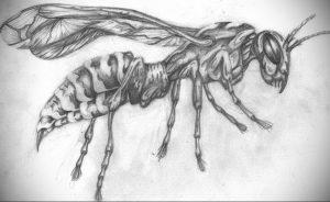 drawing wasp 07.01.2020 №1050 -wasp tattoo sketch- tatufoto.com