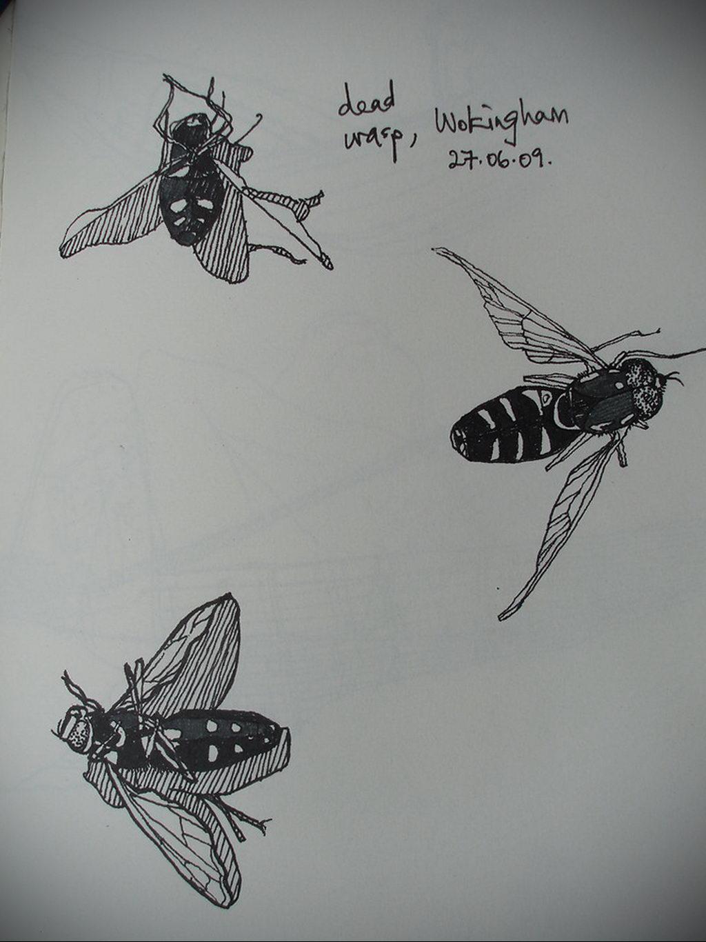 drawing wasp 07.01.2020 №1051 -wasp tattoo sketch- tatufoto.com