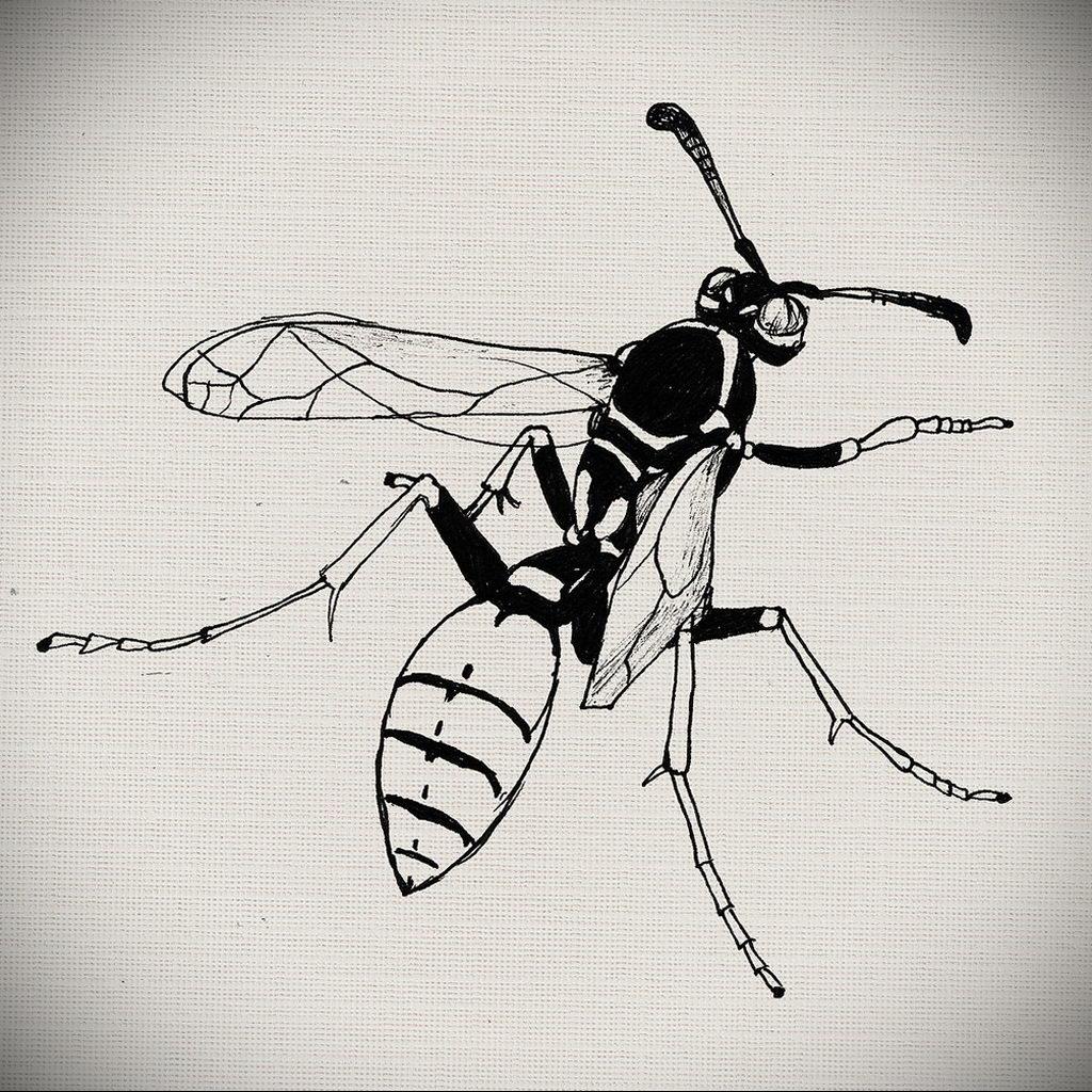 drawing wasp 07.01.2020 №1057 -wasp tattoo sketch- tatufoto.com