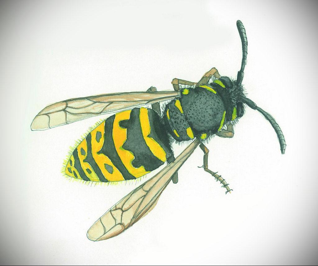 drawing wasp 07.01.2020 №1063 -wasp tattoo sketch- tatufoto.com