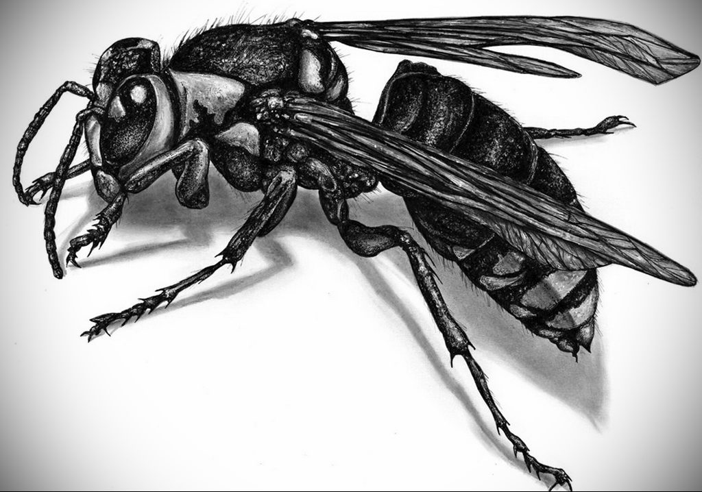 drawing wasp 07.01.2020 №1077 -wasp tattoo sketch- tatufoto.com