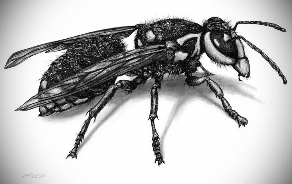 drawing wasp 07.01.2020 №1081 -wasp tattoo sketch- tatufoto.com