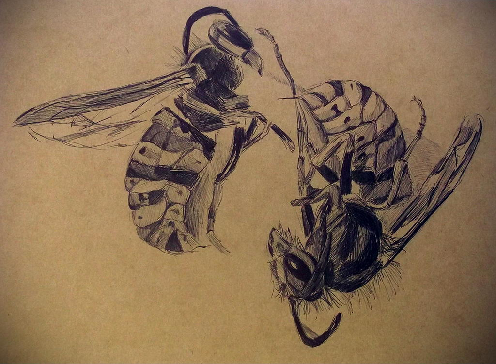 drawing wasp 07.01.2020 №1084 -wasp tattoo sketch- tatufoto.com