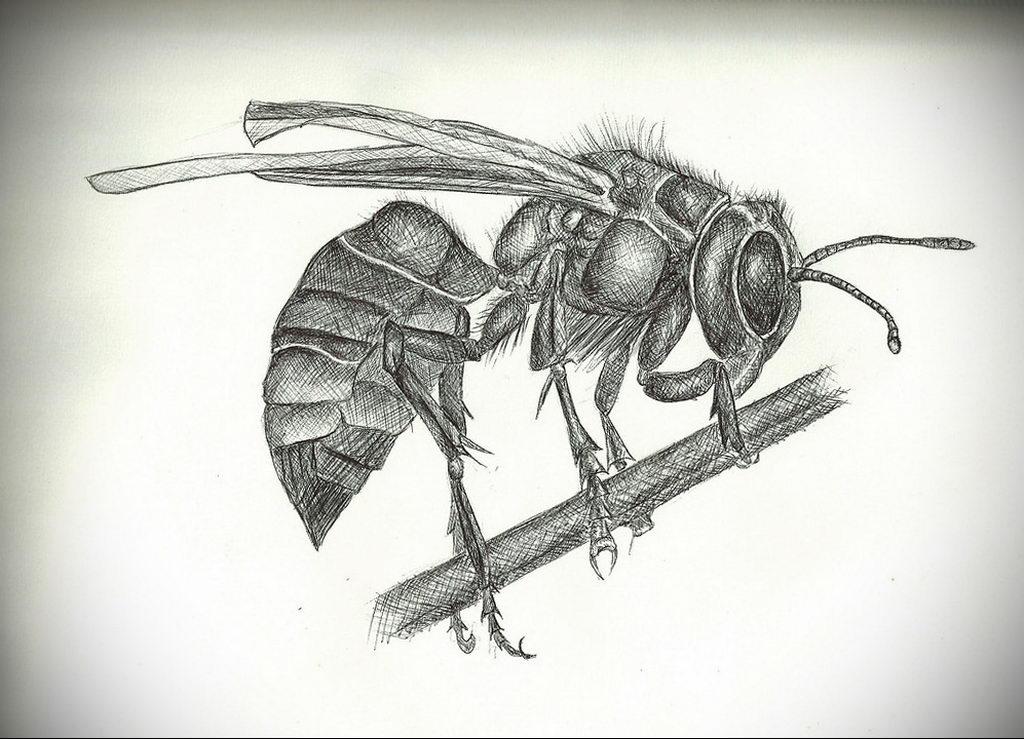 drawing wasp 07.01.2020 №1085 -wasp tattoo sketch- tatufoto.com