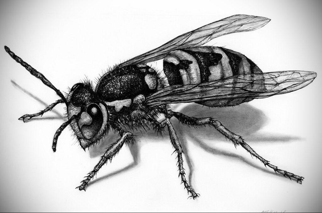 drawing wasp 07.01.2020 №1086 -wasp tattoo sketch- tatufoto.com