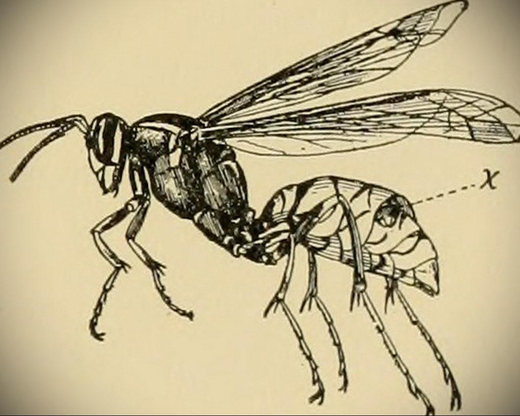 drawing wasp 07.01.2020 №1087 -wasp tattoo sketch- tatufoto.com