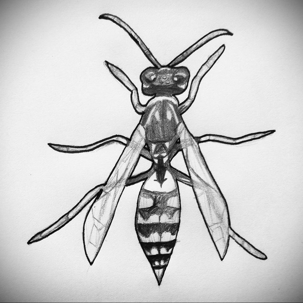drawing wasp 07.01.2020 №1089 -wasp tattoo sketch- tatufoto.com